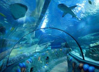 Mediterraneum, il nuovo acquario di Roma.